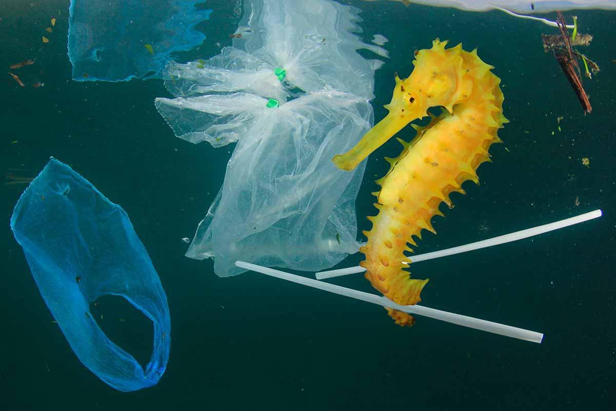 poluição plástico