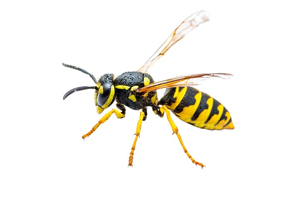 vespa diferenca