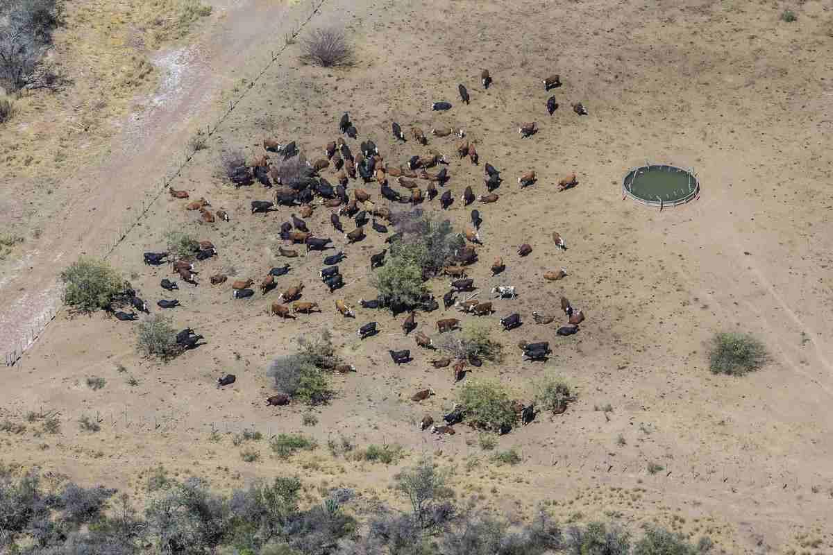 desmatamento chaco pecuaria 2