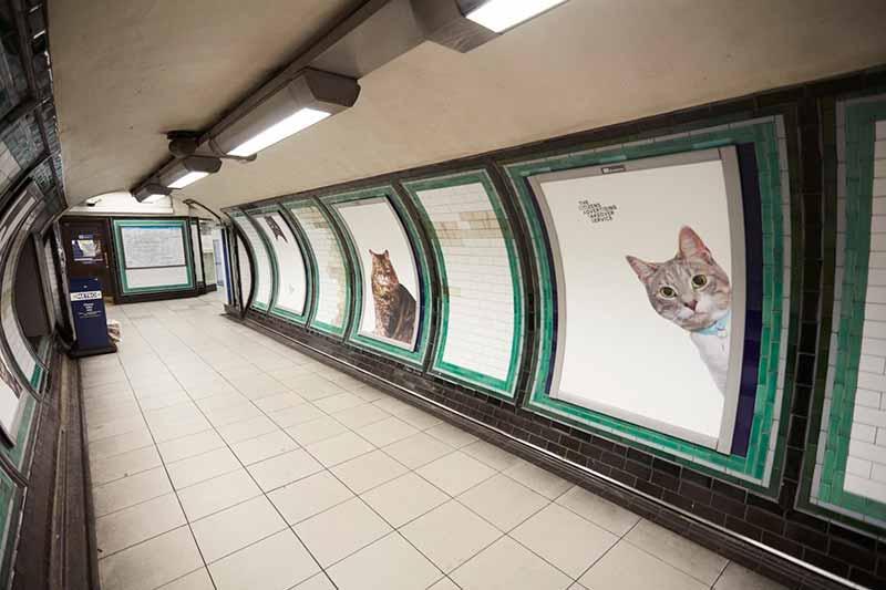 gato metro 2