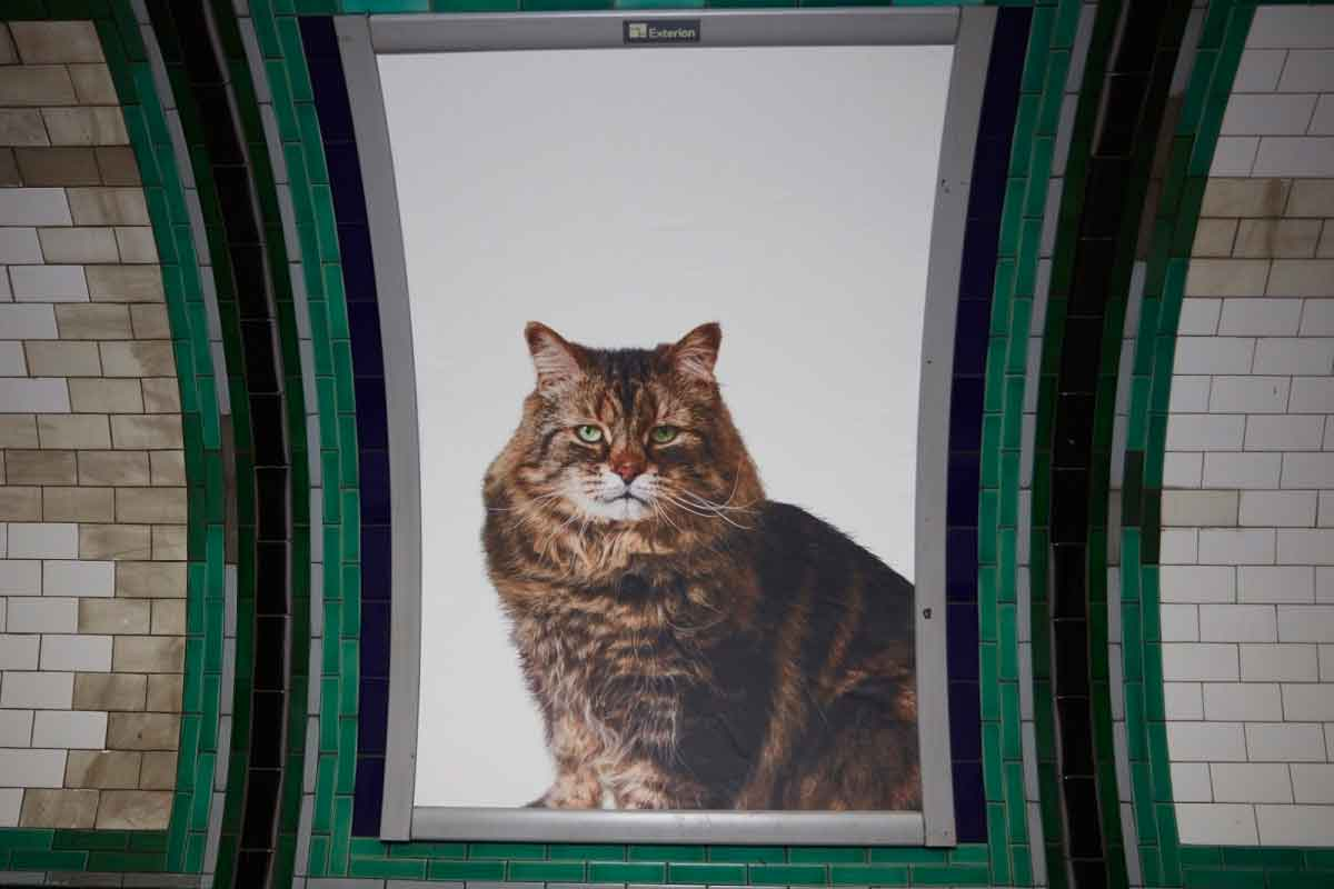 gato-metro-londres