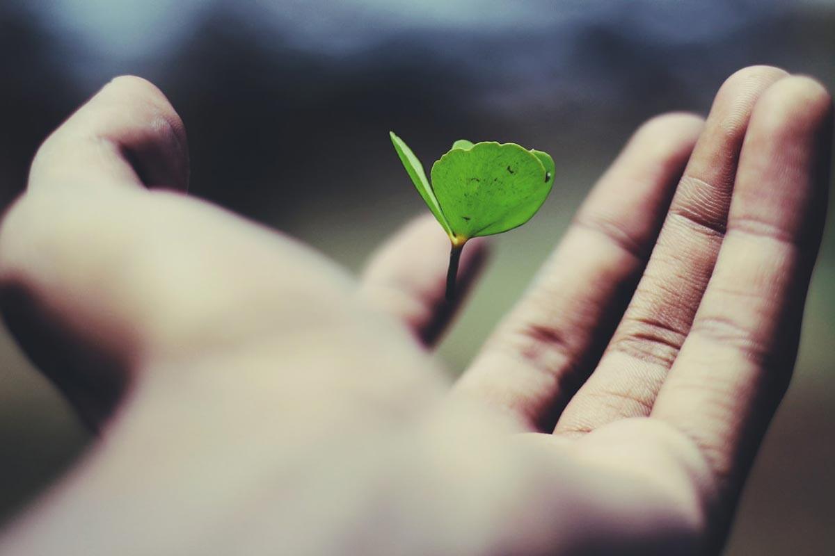 Poder transformador: abundância, dinheiro e prosperidade àqueles que sentem gratidão