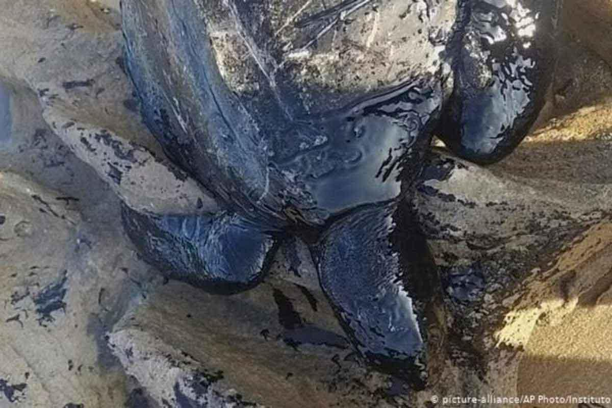 tartaruga-petróleo