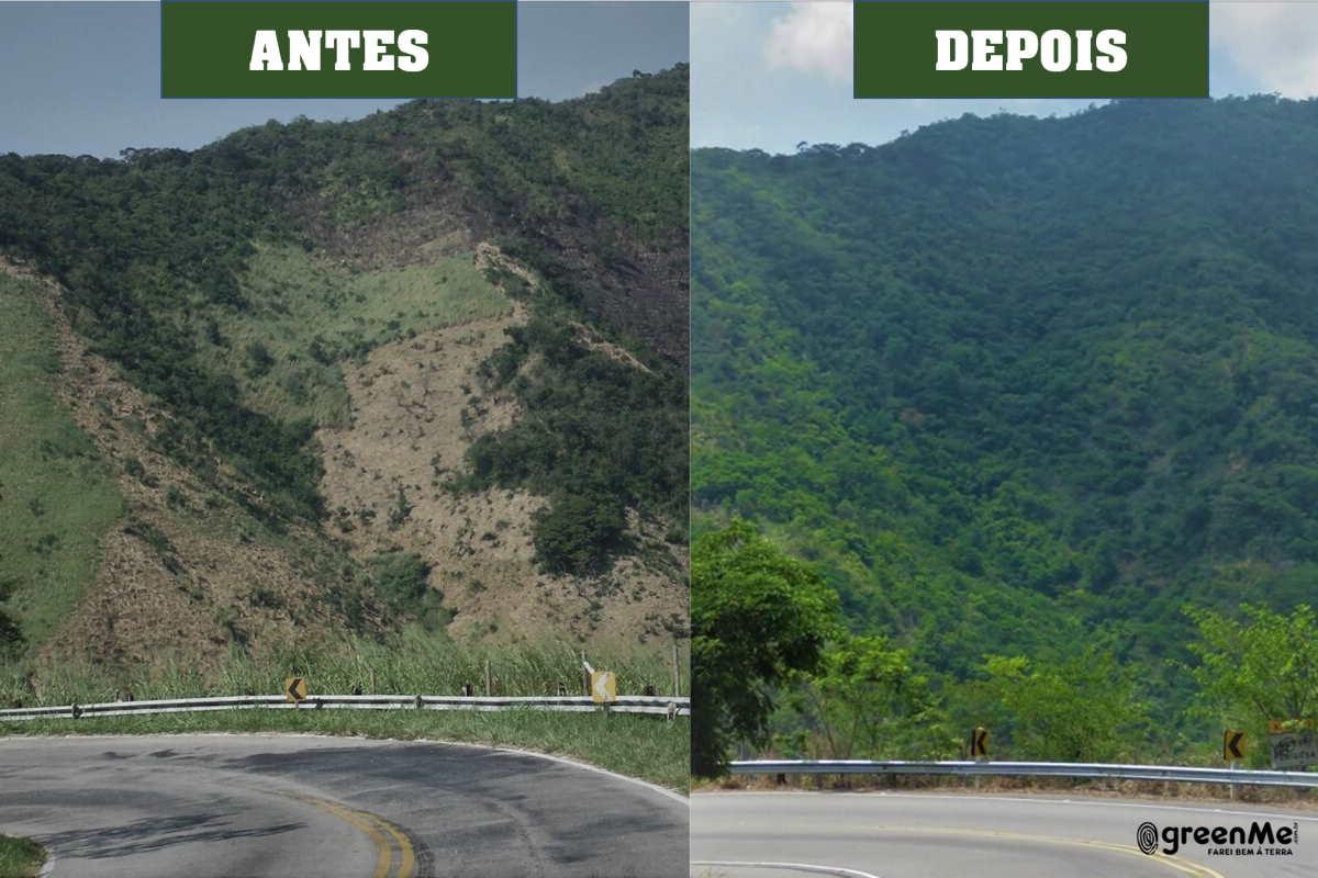 Instituto Terra de Preservação Ambiental