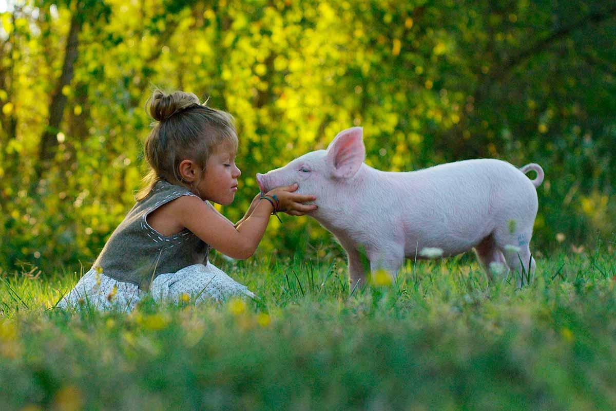 menina beija porquinho