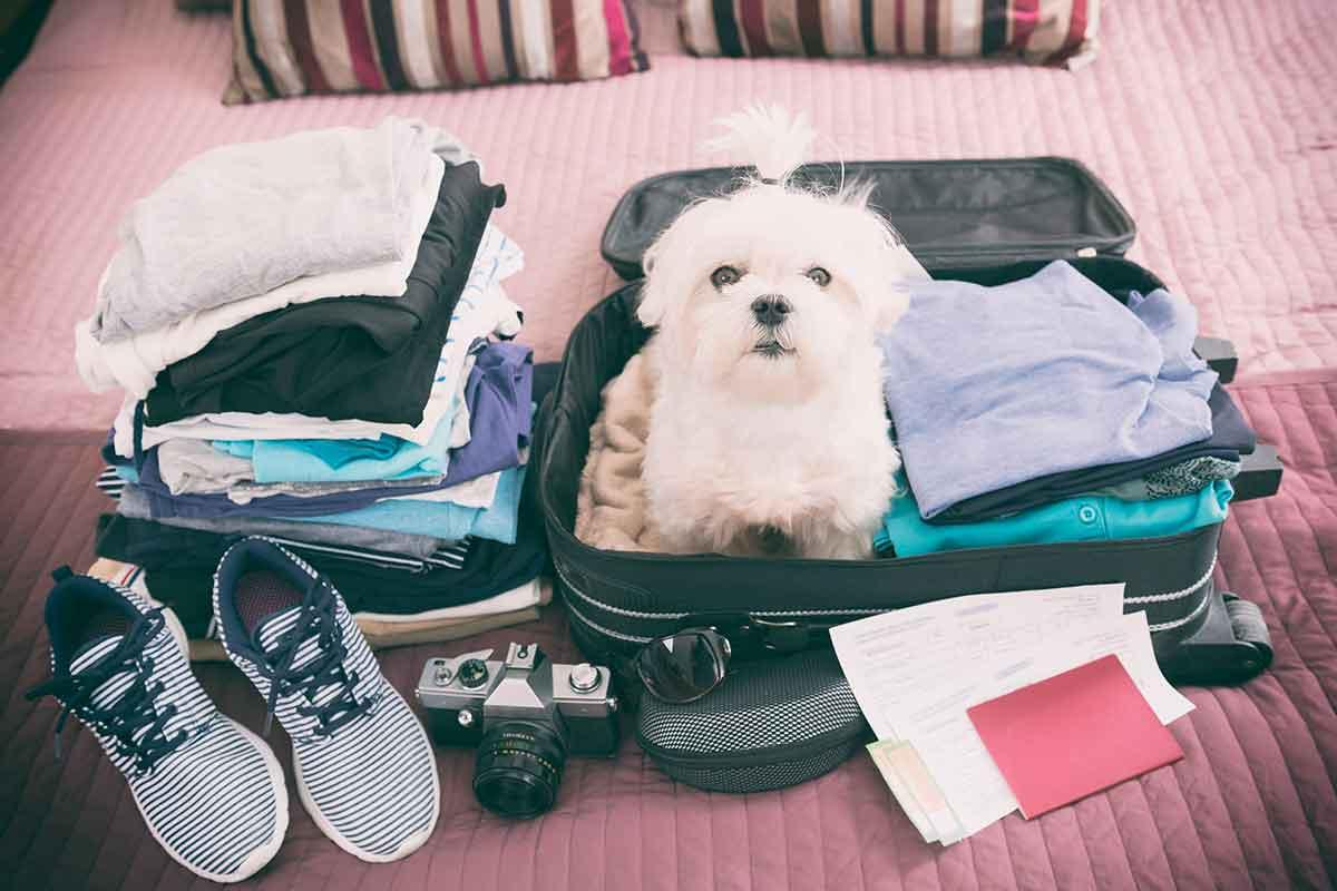 viajar com pet