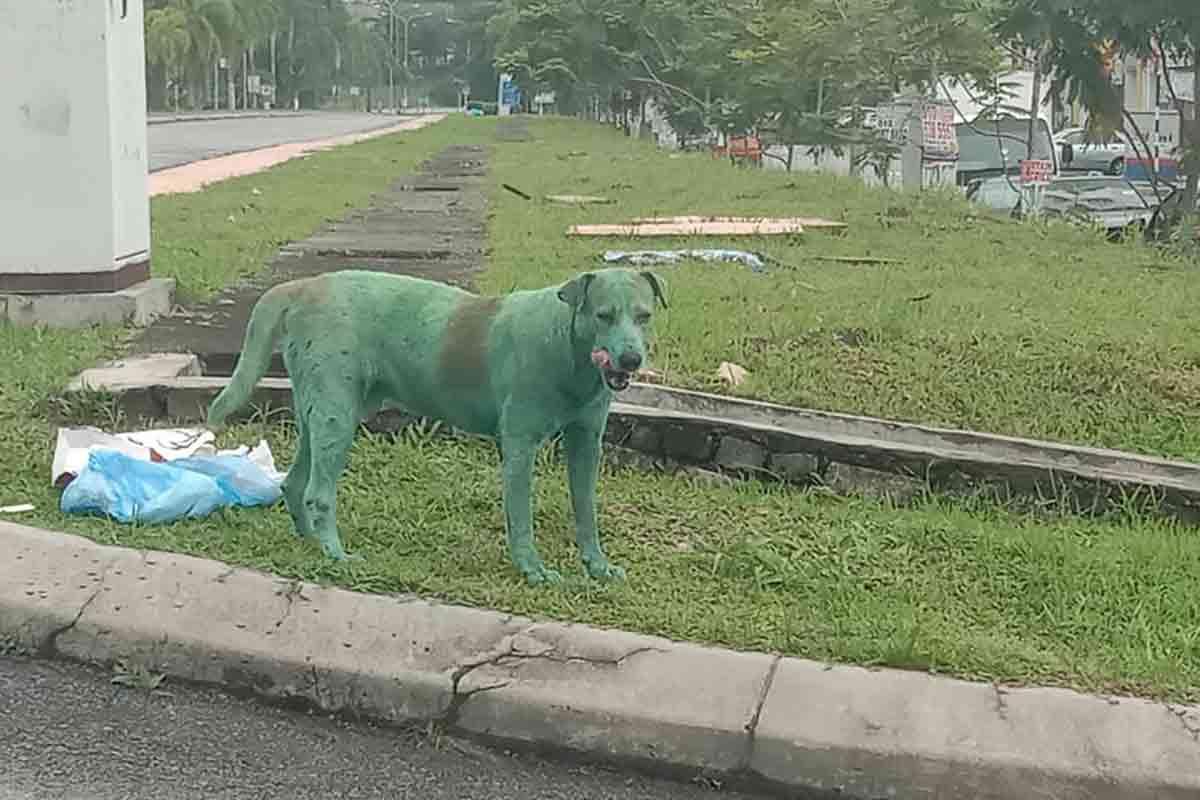 cão verde