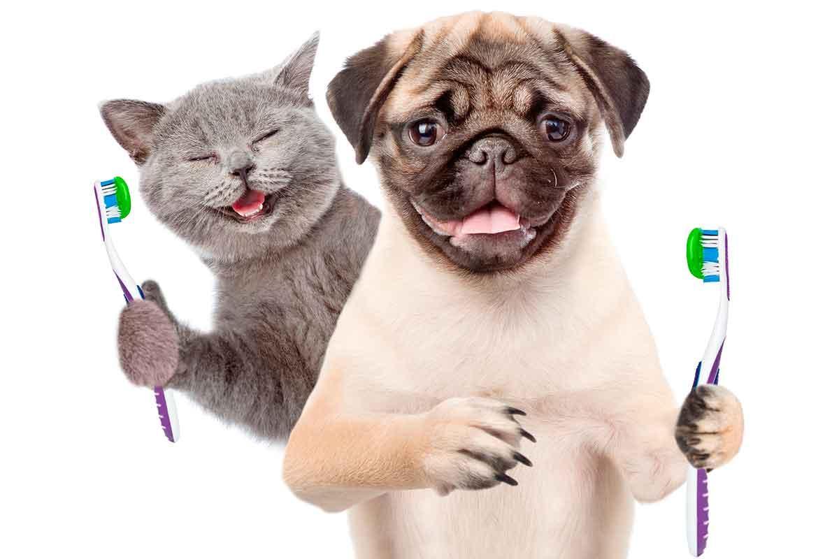 escovar dentes gato e cachorro