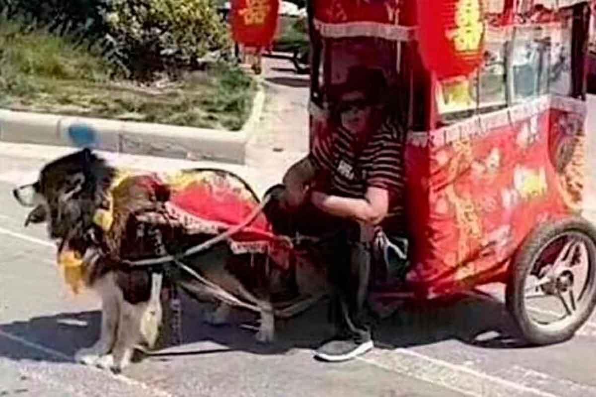 taxi-dog