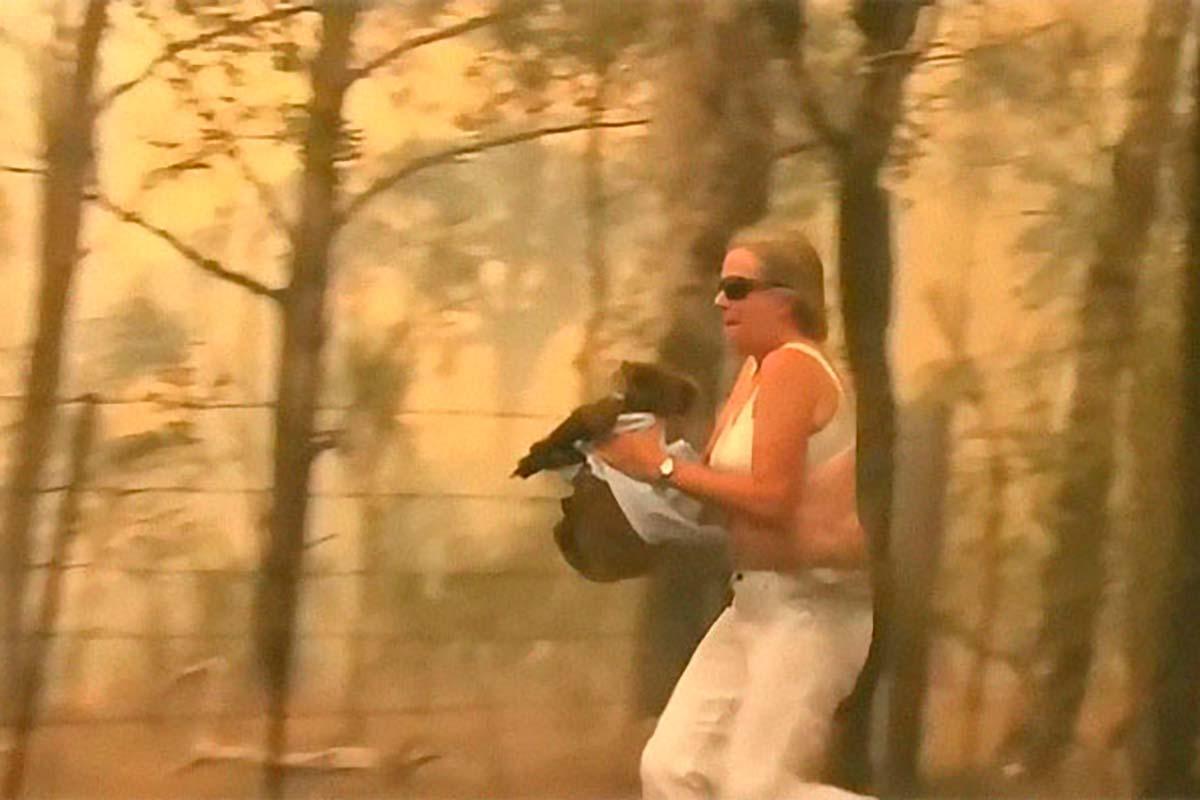 salvar coala incêndio