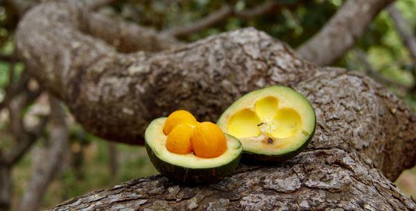 Frutas do cerrado: conheça e preserve!
