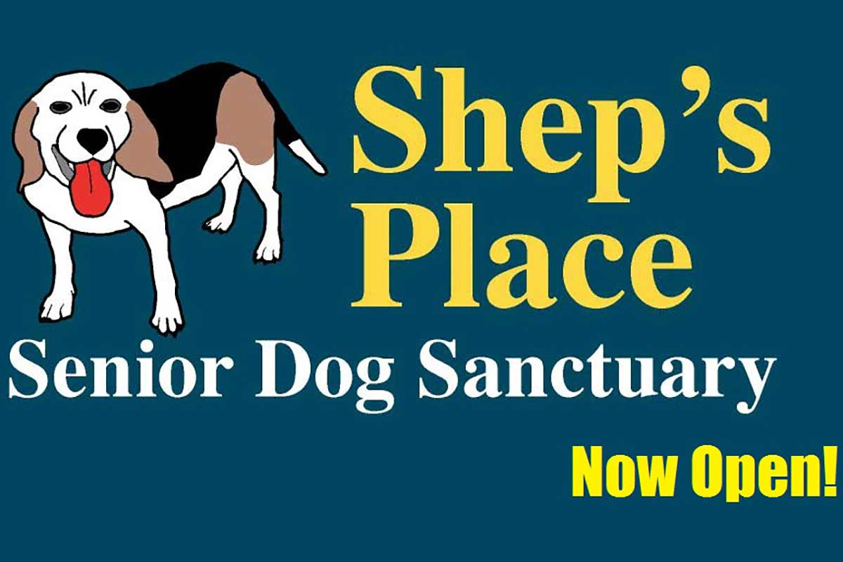 ©Shep's Place Senior Dog Sanctuary/Facebook